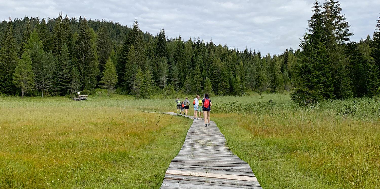 Torbiera di Danta - percorso nel bosco con gruppo di persone
