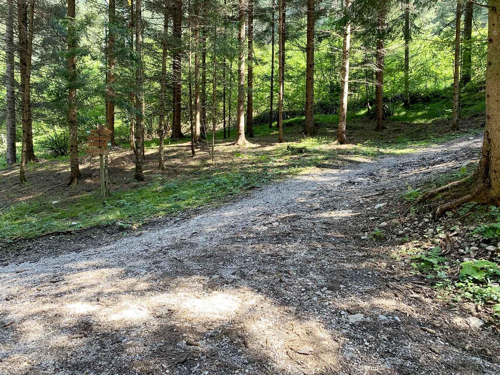 sentiero-auronzo-bosco-bersaglio