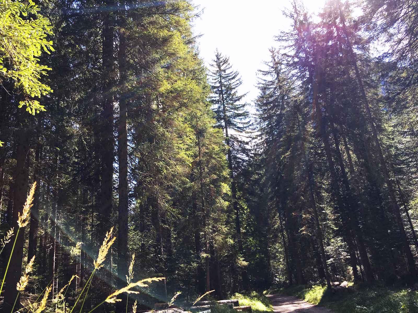 Somadida la foresta del Cadore