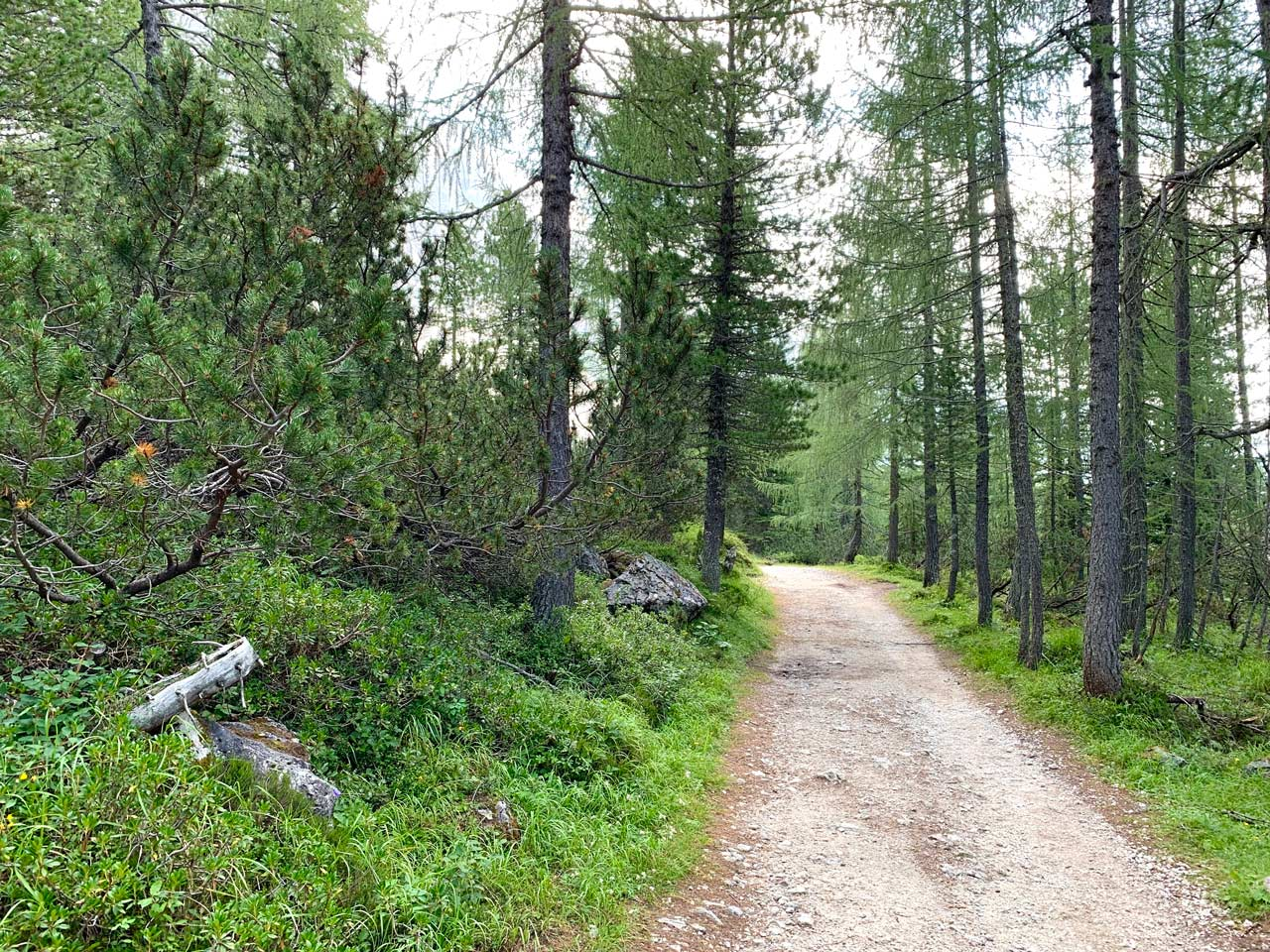 11-sentiero-misurina-col-de-varda-rifugio-citta-di-carpi