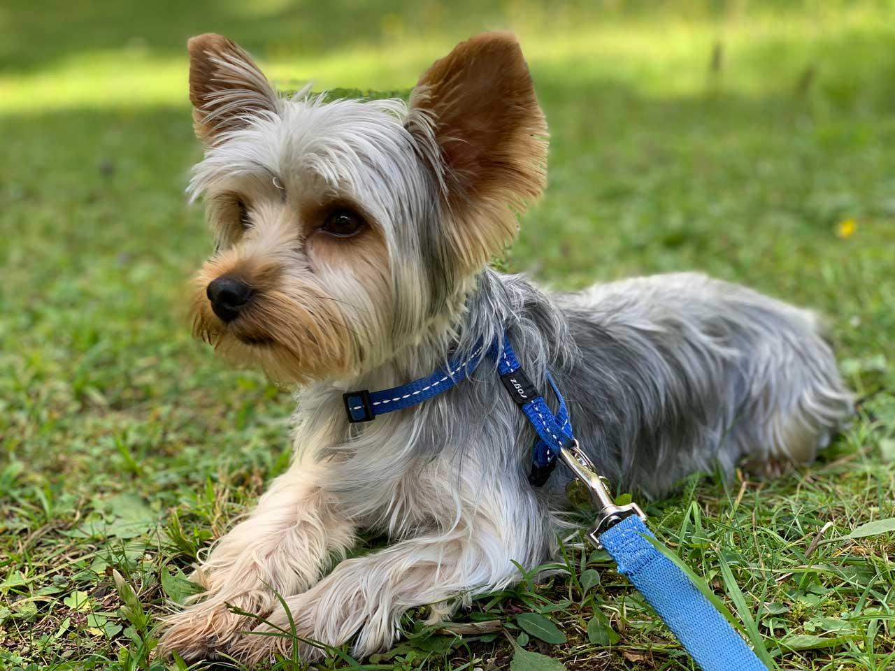 Passeggiate-con-il-cane-facili-Auronzo