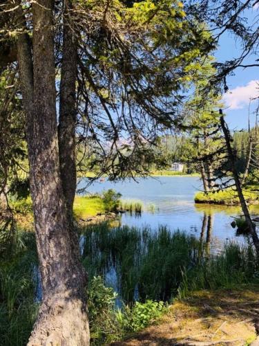 Camminata lungo il lago di Misurina