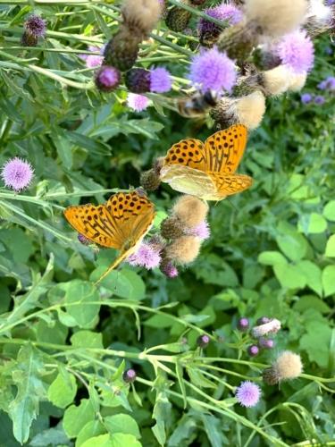 Somadida Farfalle