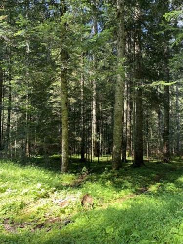 Somadida Foresta