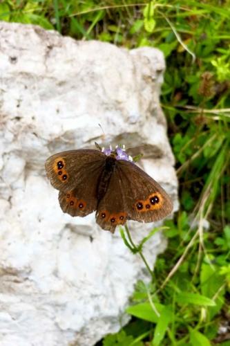 Percorso Botanico -Tita Poa farfalle