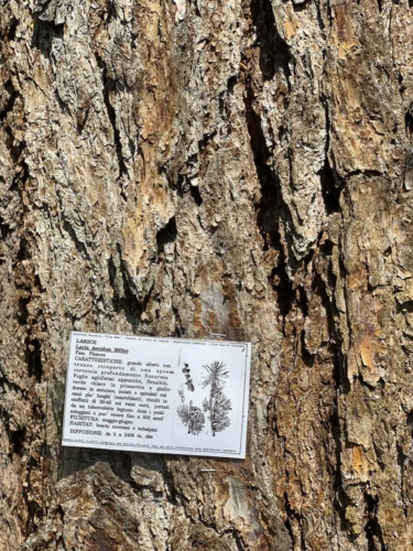 Percorso Botanico -Tita Poa tronco di larice